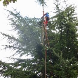 curadelverde.com-cura-del-verde-macerata-treeclimbing-potatura-alberi-alto-fusto-fruttiferi-alberi-da-frutto-olivi-viti-vigna-siepi-giardinaggio-TCCedro4