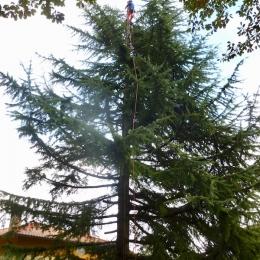 curadelverde.com-cura-del-verde-macerata-treeclimbing-potatura-alberi-alto-fusto-fruttiferi-alberi-da-frutto-olivi-viti-vigna-siepi-giardinaggio-TCCedro6