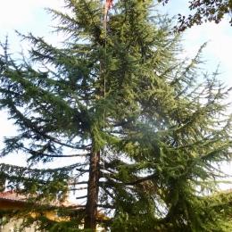 curadelverde.com-cura-del-verde-macerata-treeclimbing-potatura-alberi-alto-fusto-fruttiferi-alberi-da-frutto-olivi-viti-vigna-siepi-giardinaggio-TCCedro7