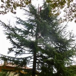 curadelverde.com-cura-del-verde-macerata-treeclimbing-potatura-alberi-alto-fusto-fruttiferi-alberi-da-frutto-olivi-viti-vigna-siepi-giardinaggio-TCCedro8