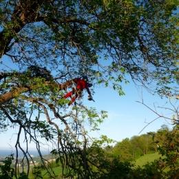 curadelverde.com-cura-del-verde-macerata-treeclimbing-potatura-alberi-alto-fusto-fruttiferi-alberi-da-frutto-olivi-viti-vigna-siepi-giardinaggio-Treeclimbing-QuerciaCiv3.039
