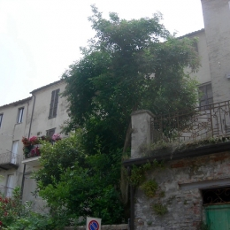 curadelverde.com-cura-del-verde-macerata-treeclimbing-potatura-alberi-alto-fusto-fruttiferi-alberi-da-frutto-olivi-viti-vigna-siepi-giardinaggio-Treeclimbing-Sambuco01