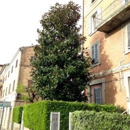 curadelverde.com-cura-del-verde-macerata-treeclimbing-potatura-alberi-alto-fusto-fruttiferi-alberi-da-frutto-olivi-viti-vigna-siepi-giardinaggio-Treeclimbing-T.C.Magn.02