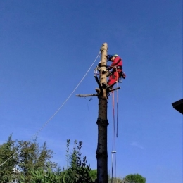 curadelverde.com-cura-del-verde-macerata-treeclimbing-potatura-alberi-alto-fusto-fruttiferi-alberi-da-frutto-olivi-viti-vigna-siepi-giardinaggio-abbattimento-abetePas05