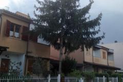 curadelverde.com-cura-del-verde-macerata-treeclimbing-potatura-alberi-alto-fusto-fruttiferi-alberi-da-frutto-olivi-viti-vigna-siepi-giardinaggio-abbattimento-abetePas01