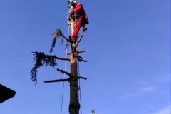 curadelverde.com-cura-del-verde-macerata-treeclimbing-potatura-alberi-alto-fusto-fruttiferi-alberi-da-frutto-olivi-viti-vigna-siepi-giardinaggio-abbattimento-abetePas03