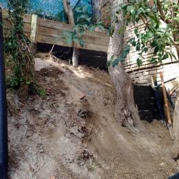 curadelverde.com-cura-del-verde-macerata-treeclimbing-potatura-alberi-alto-fusto-fruttiferi-alberi-da-frutto-olivi-viti-vigna-siepi-giardinaggio-cont4