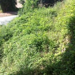 curadelverde.com-cura-del-verde-macerata-treeclimbing-potatura-alberi-alto-fusto-fruttiferi-alberi-da-frutto-olivi-siepi-giardinaggio-giardiniere-giardino-manutenzione-verde-bonifica-R.9