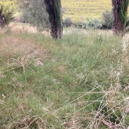 curadelverde.com-cura-del-verde-macerata-treeclimbing-potatura-alberi-alto-fusto-fruttiferi-alberi-da-frutto-olivi-viti-vigna-siepi-giardinaggio-App.17