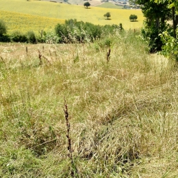 curadelverde.com-cura-del-verde-macerata-treeclimbing-potatura-alberi-alto-fusto-fruttiferi-alberi-da-frutto-olivi-viti-vigna-siepi-giardinaggio-App.9