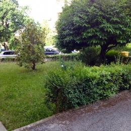 curadelverde.com-cura-del-verde-macerata-treeclimbing-potatura-alberi-alto-fusto-fruttiferi-alberi-da-frutto-olivi-viti-vigna-siepi-giardinaggio-Treeclimbing-CdV01.03