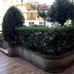 curadelverde.com-cura-del-verde-macerata-treeclimbing-potatura-alberi-alto-fusto-fruttiferi-alberi-da-frutto-olivi-viti-vigna-siepi-giardinaggio-Treeclimbing-CdV02.07a
