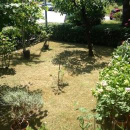 curadelverde.com-cura-del-verde-macerata-treeclimbing-potatura-alberi-alto-fusto-fruttiferi-alberi-da-frutto-olivi-viti-vigna-siepi-giardinaggio-Treeclimbing-CdV03.02a