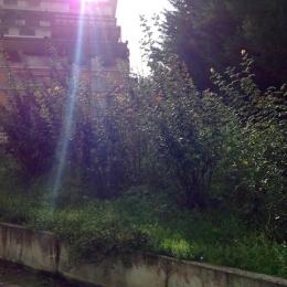 curadelverde.com-cura-del-verde-macerata-treeclimbing-potatura-alberi-alto-fusto-fruttiferi-alberi-da-frutto-olivi-viti-vigna-siepi-giardinaggio-Treeclimbing-CdV04.01