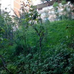 curadelverde.com-cura-del-verde-macerata-treeclimbing-potatura-alberi-alto-fusto-fruttiferi-alberi-da-frutto-olivi-viti-vigna-siepi-giardinaggio-Treeclimbing-CdV04.02