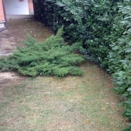 curadelverde.com-cura-del-verde-macerata-treeclimbing-potatura-alberi-alto-fusto-fruttiferi-alberi-da-frutto-olivi-viti-vigna-siepi-giardinaggio-Treeclimbing-CdV05.2a