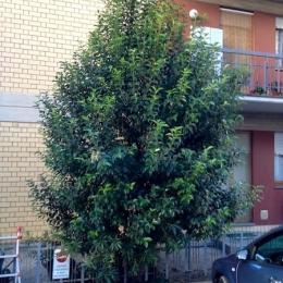 curadelverde.com-cura-del-verde-macerata-treeclimbing-potatura-alberi-alto-fusto-fruttiferi-alberi-da-frutto-olivi-viti-vigna-siepi-giardinaggio-Treeclimbing-GiardinaggioAN11