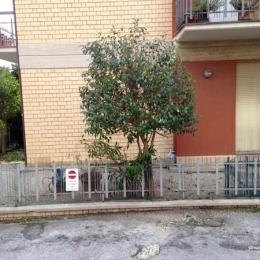 curadelverde.com-cura-del-verde-macerata-treeclimbing-potatura-alberi-alto-fusto-fruttiferi-alberi-da-frutto-olivi-viti-vigna-siepi-giardinaggio-Treeclimbing-GiardinaggioAN12
