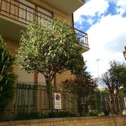 curadelverde.com-cura-del-verde-macerata-treeclimbing-potatura-alberi-alto-fusto-fruttiferi-alberi-da-frutto-olivi-viti-vigna-siepi-giardinaggio-Treeclimbing-GiardinaggioAN14