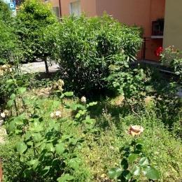 curadelverde.com-cura-del-verde-macerata-treeclimbing-potatura-alberi-alto-fusto-fruttiferi-alberi-da-frutto-olivi-viti-vigna-siepi-giardinaggio-Treeclimbing-MdVEx02