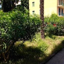 curadelverde.com-cura-del-verde-macerata-treeclimbing-potatura-alberi-alto-fusto-fruttiferi-alberi-da-frutto-olivi-viti-vigna-siepi-giardinaggio-Treeclimbing-MdVEx03