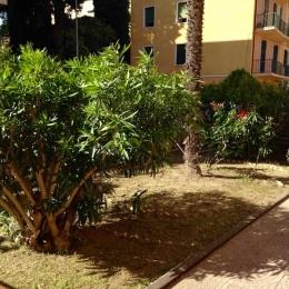 curadelverde.com-cura-del-verde-macerata-treeclimbing-potatura-alberi-alto-fusto-fruttiferi-alberi-da-frutto-olivi-viti-vigna-siepi-giardinaggio-Treeclimbing-MdVEx04
