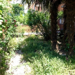 curadelverde.com-cura-del-verde-macerata-treeclimbing-potatura-alberi-alto-fusto-fruttiferi-alberi-da-frutto-olivi-viti-vigna-siepi-giardinaggio-Treeclimbing-MdVEx06