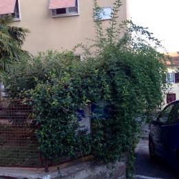 curadelverde.com-cura-del-verde-macerata-treeclimbing-potatura-alberi-alto-fusto-fruttiferi-alberi-da-frutto-olivi-viti-vigna-siepi-giardinaggio-Treeclimbing-MdVEx12