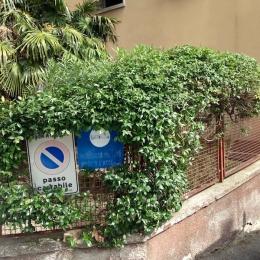 curadelverde.com-cura-del-verde-macerata-treeclimbing-potatura-alberi-alto-fusto-fruttiferi-alberi-da-frutto-olivi-viti-vigna-siepi-giardinaggio-Treeclimbing-MdVEx16