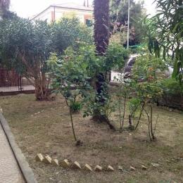 curadelverde.com-cura-del-verde-macerata-treeclimbing-potatura-alberi-alto-fusto-fruttiferi-alberi-da-frutto-olivi-viti-vigna-siepi-giardinaggio-Treeclimbing-MdVEx2'