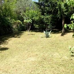 curadelverde.com-cura-del-verde-macerata-treeclimbing-potatura-alberi-alto-fusto-fruttiferi-alberi-da-frutto-olivi-viti-vigna-siepi-giardinaggio-Treeclimbing-MdVUn01'