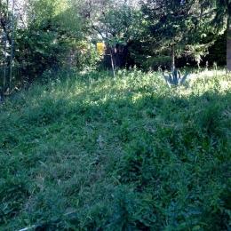 curadelverde.com-cura-del-verde-macerata-treeclimbing-potatura-alberi-alto-fusto-fruttiferi-alberi-da-frutto-olivi-viti-vigna-siepi-giardinaggio-Treeclimbing-MdVUn01
