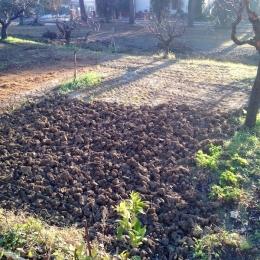 curadelverde.com-cura-del-verde-macerata-treeclimbing-potatura-alberi-alto-fusto-fruttiferi-alberi-da-frutto-olivi-viti-vigna-siepi-giardinaggio-Treeclimbing-Vangatura03