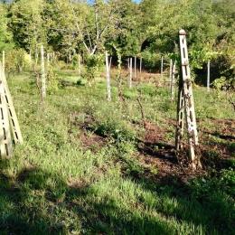 curadelverde.com-cura-del-verde-macerata-treeclimbing-potatura-alberi-alto-fusto-fruttiferi-alberi-da-frutto-olivi-viti-vigna-siepi-giardinaggio-man.cor.5