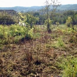 curadelverde.com-cura-del-verde-macerata-treeclimbing-potatura-alberi-alto-fusto-fruttiferi-alberi-da-frutto-olivi-viti-vigna-siepi-giardinaggio-man.cor.7
