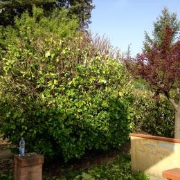 curadelverde.com-cura-del-verde-macerata-treeclimbing-potatura-alberi-alto-fusto-fruttiferi-alberi-da-frutto-olivi-viti-vigna-siepi-giardinaggio-man.giar.ssm.005b