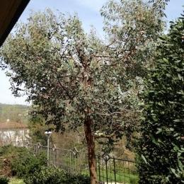 curadelverde.com-cura-del-verde-macerata-treeclimbing-potatura-alberi-alto-fusto-fruttiferi-alberi-da-frutto-olivi-viti-vigna-siepi-giardinaggio-man.giar.ssm.026