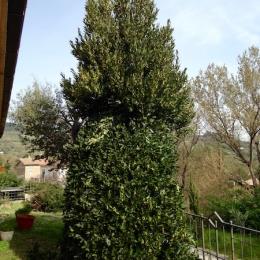 curadelverde.com-cura-del-verde-macerata-treeclimbing-potatura-alberi-alto-fusto-fruttiferi-alberi-da-frutto-olivi-viti-vigna-siepi-giardinaggio-man.giar.ssm.027