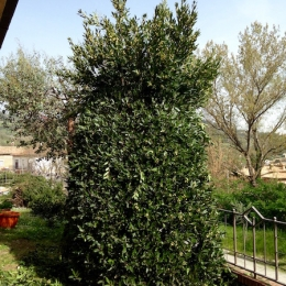 curadelverde.com-cura-del-verde-macerata-treeclimbing-potatura-alberi-alto-fusto-fruttiferi-alberi-da-frutto-olivi-viti-vigna-siepi-giardinaggio-man.giar.ssm.028
