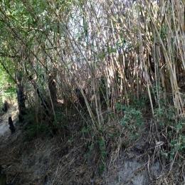 curadelverde.com-cura-del-verde-macerata-treeclimbing-potatura-alberi-alto-fusto-fruttiferi-alberi-da-frutto-olivi-viti-vigna-siepi-giardinaggio-pul1