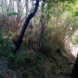 curadelverde.com-cura-del-verde-macerata-treeclimbing-potatura-alberi-alto-fusto-fruttiferi-alberi-da-frutto-olivi-viti-vigna-siepi-giardinaggio-pul3