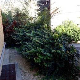 curadelverde.com-cura-del-verde-macerata-treeclimbing-potatura-alberi-alto-fusto-fruttiferi-alberi-da-frutto-olivi-viti-vigna-siepi-giardinaggio-Treeclimbing-GiardinaggioAN02