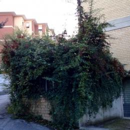 curadelverde.com-cura-del-verde-macerata-treeclimbing-potatura-alberi-alto-fusto-fruttiferi-alberi-da-frutto-olivi-viti-vigna-siepi-giardinaggio-Treeclimbing-GiardinaggioAN09