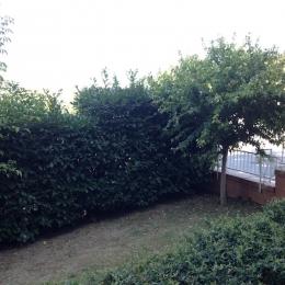 curadelverde.com-cura-del-verde-macerata-treeclimbing-potatura-alberi-alto-fusto-fruttiferi-alberi-da-frutto-olivi-viti-vigna-siepi-giardinaggio-Treeclimbing-Siepe08