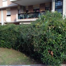 curadelverde.com-cura-del-verde-macerata-treeclimbing-potatura-alberi-alto-fusto-fruttiferi-alberi-da-frutto-olivi-viti-vigna-siepi-giardinaggio-Treeclimbing-Siepe4b'