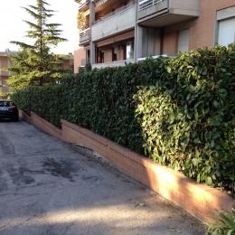 curadelverde.com-cura-del-verde-macerata-treeclimbing-potatura-alberi-alto-fusto-fruttiferi-alberi-da-frutto-olivi-viti-vigna-siepi-giardinaggio-Treeclimbing-Siepe6a