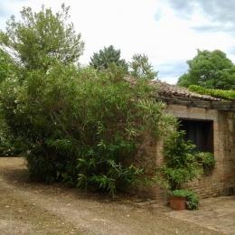 curadelverde.com-cura-del-verde-macerata-treeclimbing-potatura-alberi-alto-fusto-fruttiferi-alberi-da-frutto-olivi-viti-vigna-siepi-giardinaggio-tam1.10