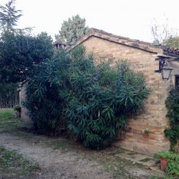 curadelverde.com-cura-del-verde-macerata-treeclimbing-potatura-alberi-alto-fusto-fruttiferi-alberi-da-frutto-olivi-viti-vigna-siepi-giardinaggio-tam1.11