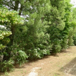 curadelverde.com-cura-del-verde-macerata-treeclimbing-potatura-alberi-alto-fusto-fruttiferi-alberi-da-frutto-olivi-viti-vigna-siepi-giardinaggio-tam1.12
