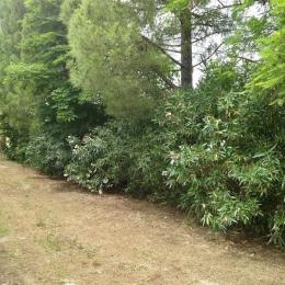 curadelverde.com-cura-del-verde-macerata-treeclimbing-potatura-alberi-alto-fusto-fruttiferi-alberi-da-frutto-olivi-viti-vigna-siepi-giardinaggio-tam1.14